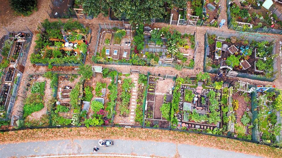 Garden%20birdpic_edited.jpg