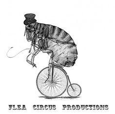 Você já viu um Circo de Pulgas?