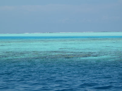 Reef - Andaman Islands