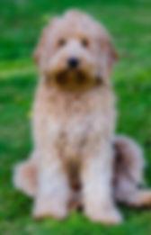 Beanie 18 months 1.jpg