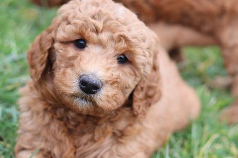 puppy picture.JPG