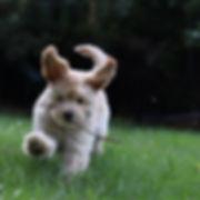 BooBoo running.JPG
