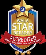 WALA Labradoodledoo_Accredited Star 2020