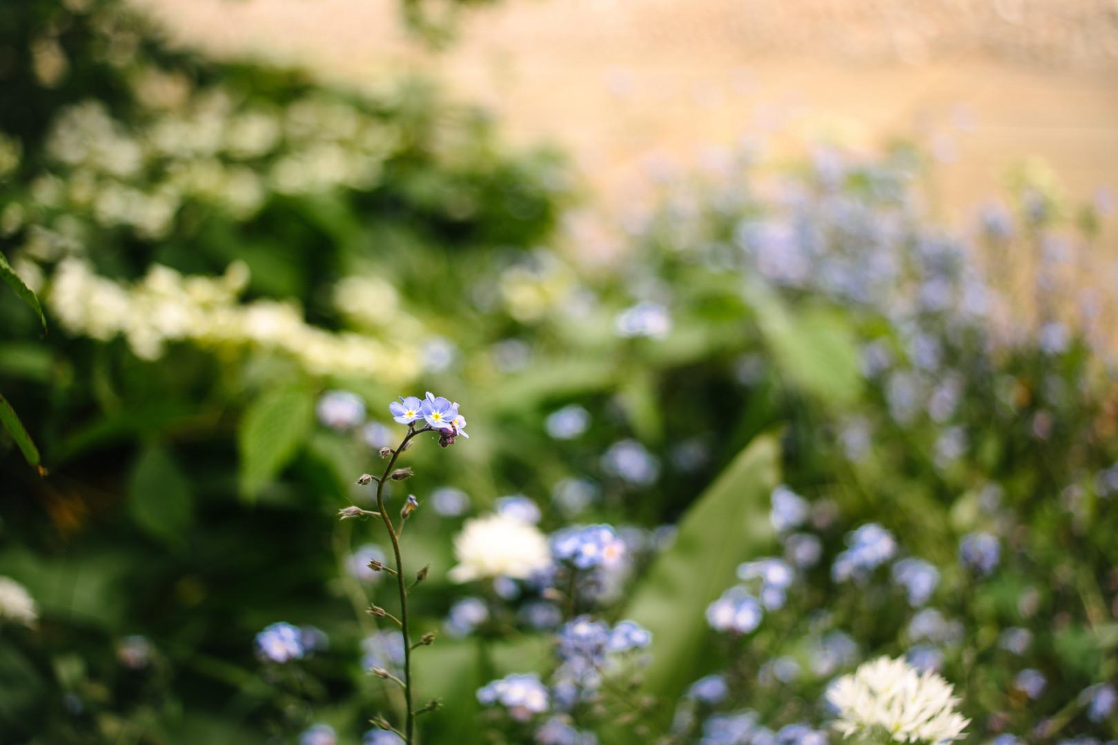 Merton Oxford gardens smaller file size-
