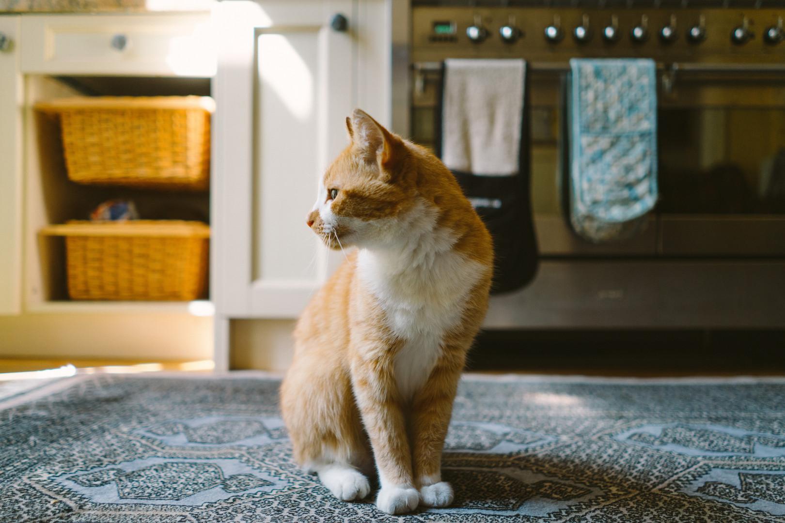 Cat-6.jpg