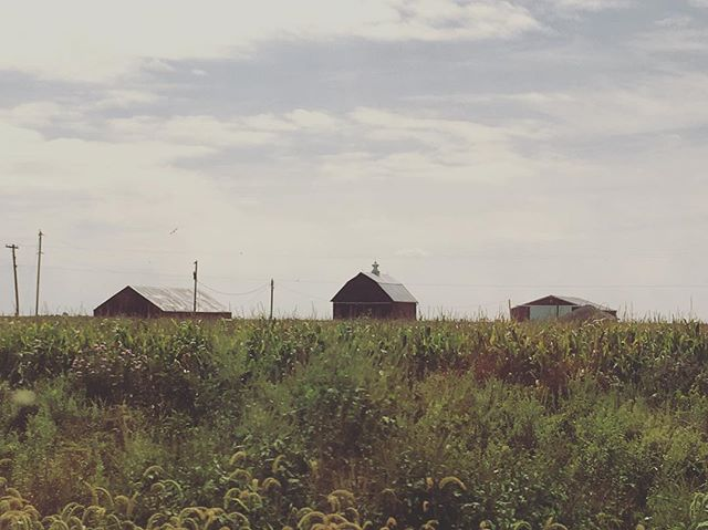 #Redbarn among the #cornfields of #illinois