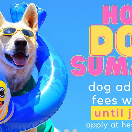Hot Dog Summer Adoption Event - Extended!