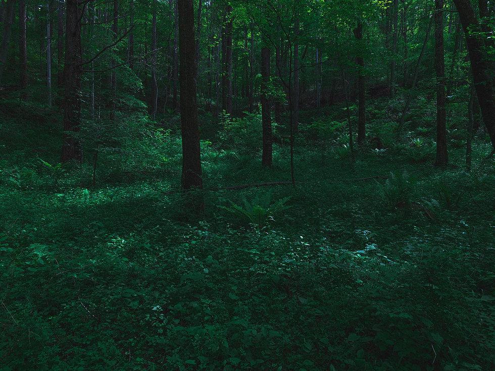 210522_forest_0003.jpg