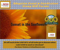 Bring your family & dog to enjoy the Sunset in the Sunflowers!