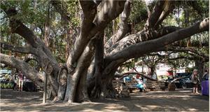 Lahaina Restoration Foundation