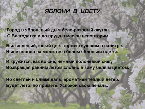 Яблони в цвету Сергея Ханжина