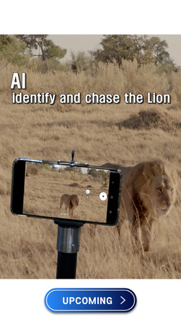 AI, IDENTIFY AND CHASE THE LION