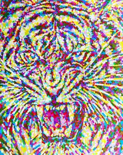 tiger STALOGY
