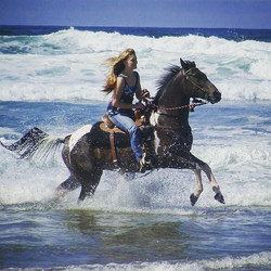Can't wait till _sophialtaylor and I get to go conquer the beach again!_#horsesonthebeach #Oregonbea