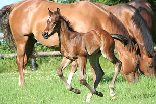 Pferd1.jpg