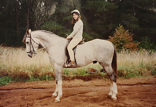 Billjim Australian Waler Horse Stallion