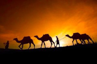 Camels in Desert_UAE A-Z