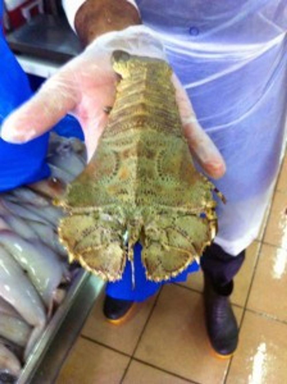 Mystery Sea Creature