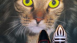 Daily-ish Photo–Wonder Cat