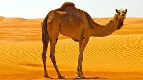 I Want to Live on Camel Street
