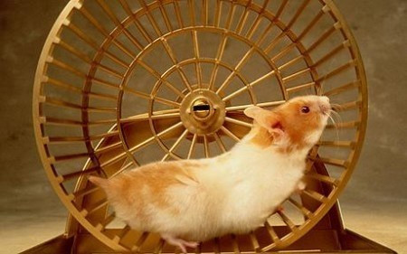 Just Another Hamster Wheel?