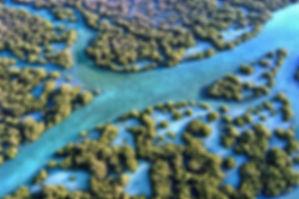 mangrove-kayak-tour-2.jpg