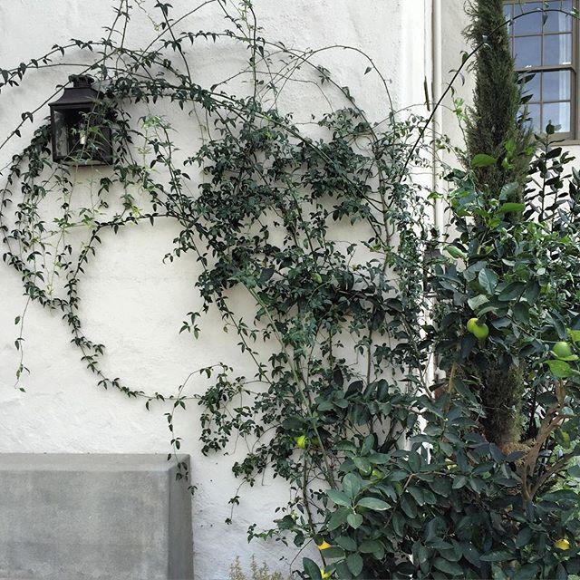 Garden vines