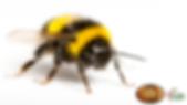 Beestingimage.PNG