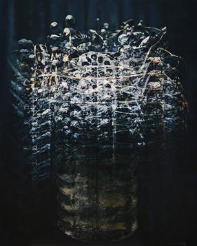 2014, D Hwang, Dead Flower, Oil on Canva