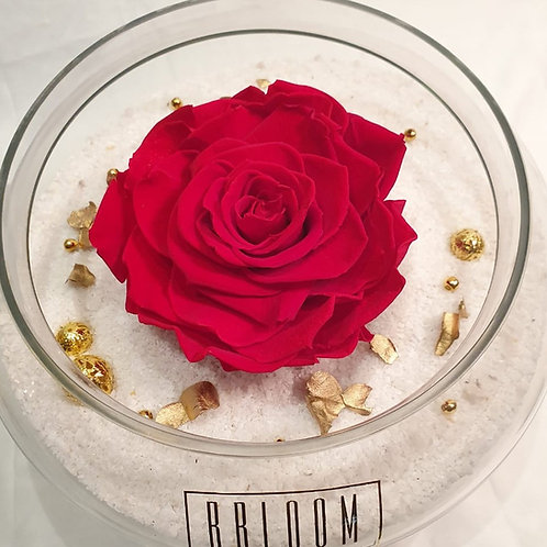 XL Love right in Glass Vase