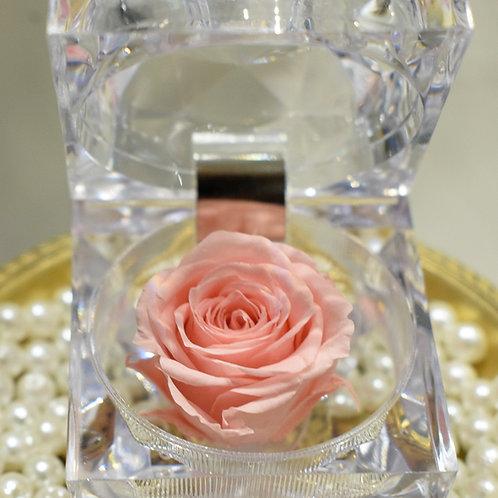 Mini Roses in acrylic box