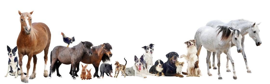 wendy animal communication