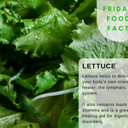 Lettuce-food-fact.png