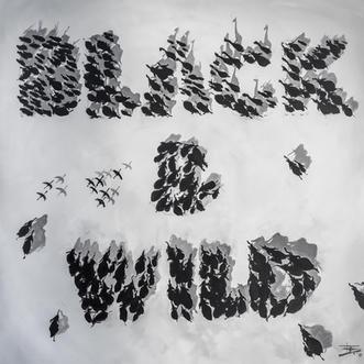 BLACK & WILD