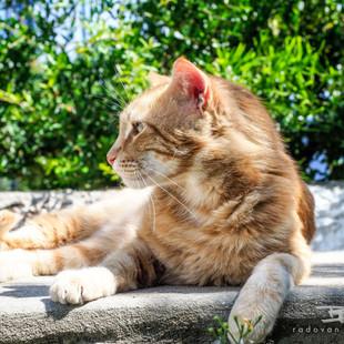 Katze - Insel Spetses in Griechenland