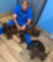 Dr Peace and chocolate lab puppies.jpg