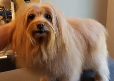 Grooming_Cooper Martin after.jpg