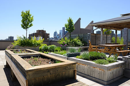 Farm in the City - rooftop garden
