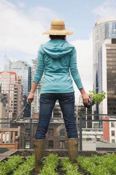 Farm in the City - Urban farmer