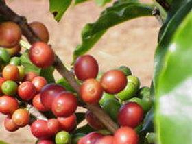 Peruvian Decaf - 99.9% Caffeine Free (Medium Roast)