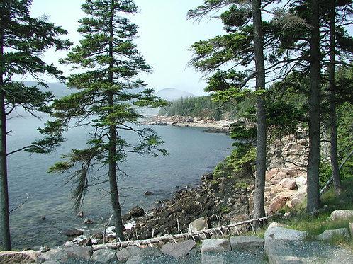 Acadia Blend - Medium Roast