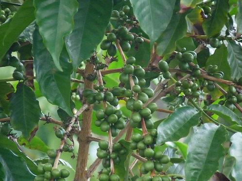 Black & Tan Decaf - 99.9% Caffeine Free (Honduras)