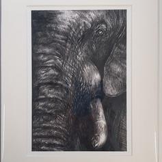 Elephant Print (Wild Series)