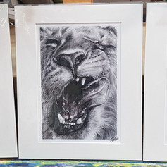 Wild Series Prints
