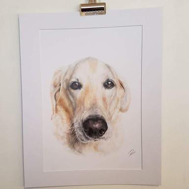 Golden Labrador Rachel Baker Artist