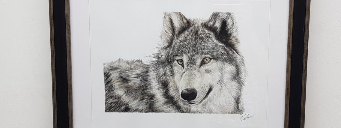 Lone Wolf by Rachel Baker Artist