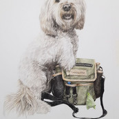 Rachel Baker Artist Pet Portrait
