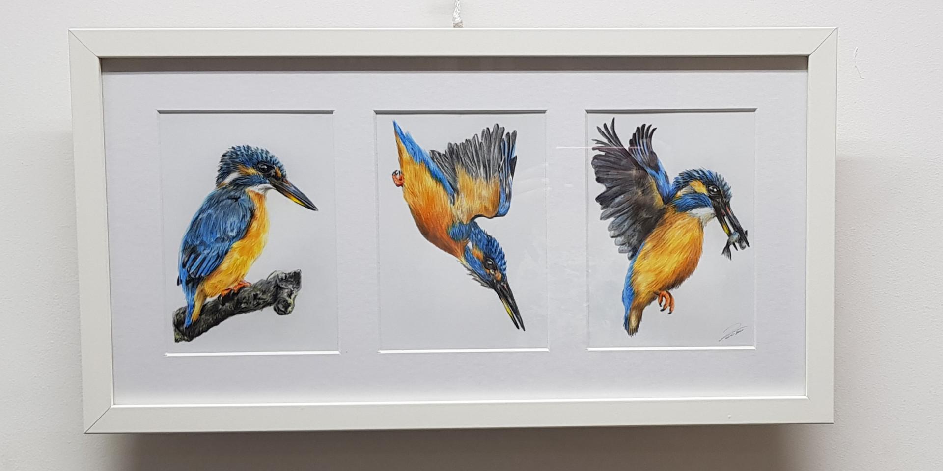 Kingfisher in motion by Rachel Baker Artist