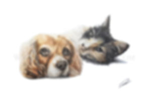Pet Portrait Drawing