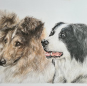Dog Portrait by Rachel Baker Artist